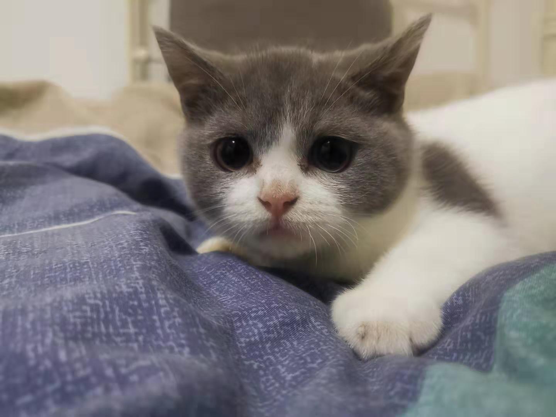 cat27