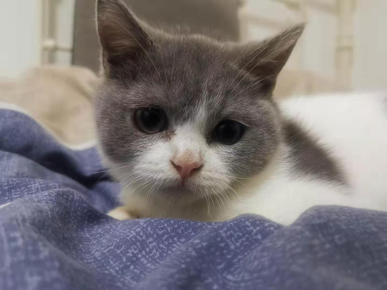 cat28