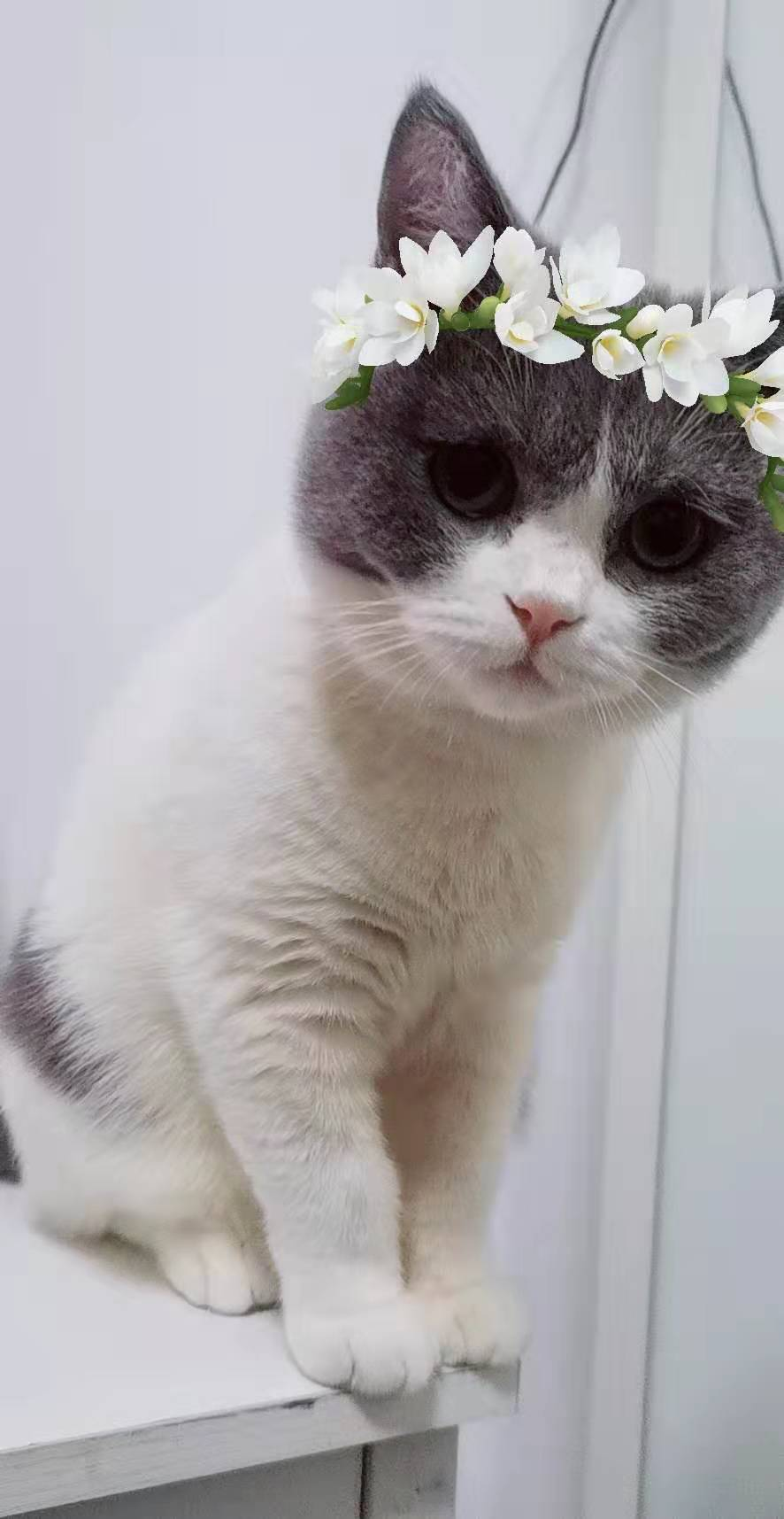 cat48
