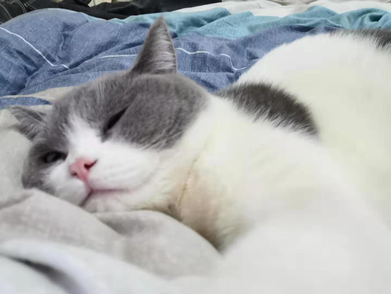 cat59