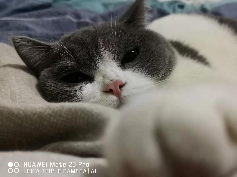cat62